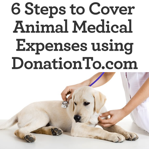 6-steps-to-animal-medical-fundraising