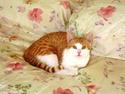 BEE HOLISTIC CAT RESCUE AND CARE INC | crowdfunding | online fundraising